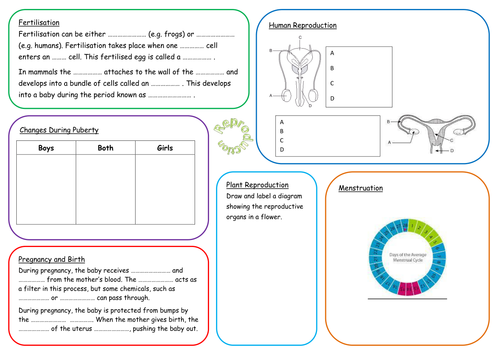 KS3 Reproduction Revision Mat
