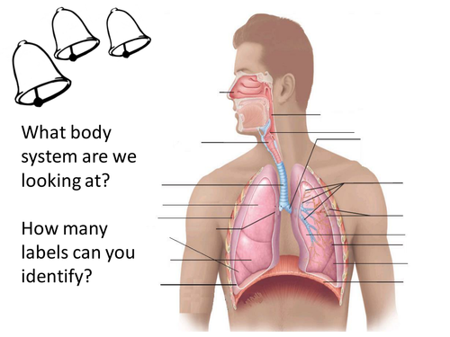 OCR GCSE PE Respiratory system unit of work