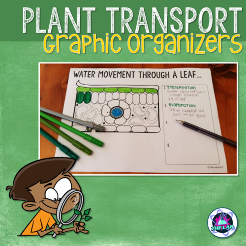 Transport in Plants Graphic Organisers