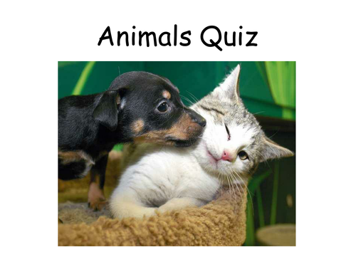15 quizzes for fun or tutor time