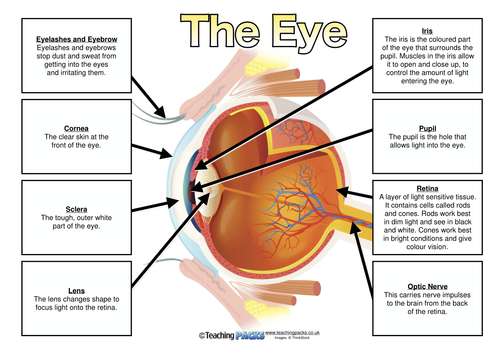 label the eye - poster and differentiated matching activity ... label eye diagram ks2 front eye diagram tes