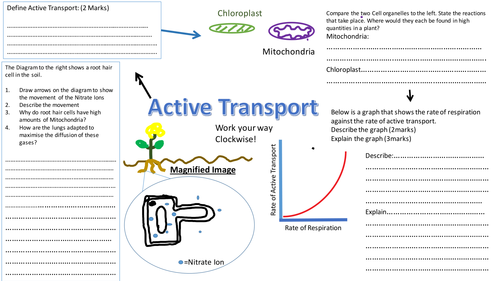 Active Transport Revision Sheet Mat Worksheet Aqa 9 1