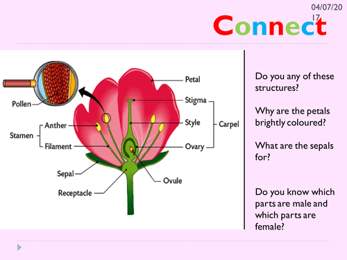 KS3 pollination lesson | Teaching Resources