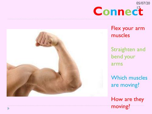 KS3 movement and muscles