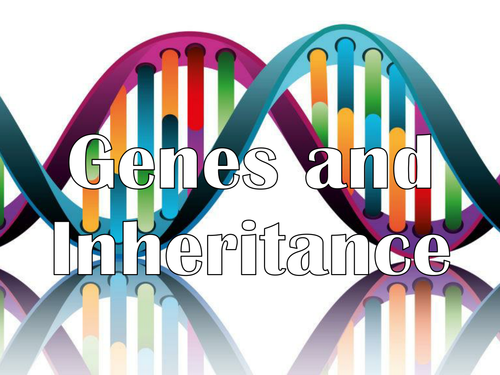 AQA A Level - Genes and Inheritance