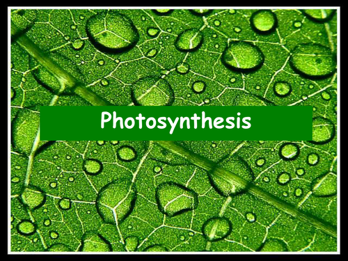 Photosynthesis and leaf structure summary