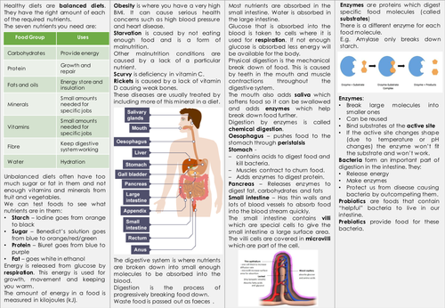 KS3 Breathing and Digestion Knowledge Organiser