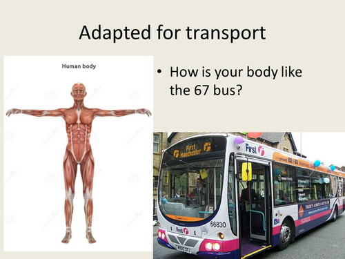 adapted for transport