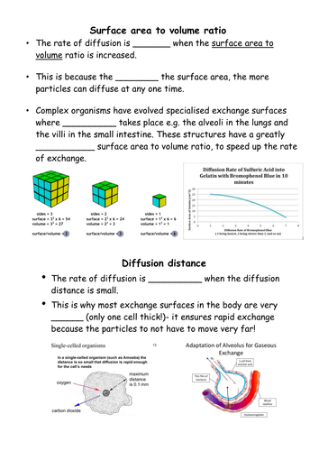 factors affecting diffusion worksheet
