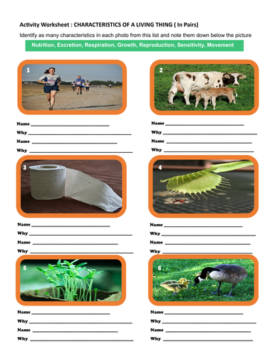 Characteristics of a living thing - Identify the characteristics