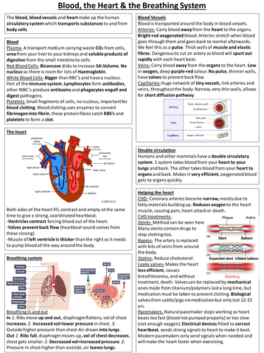 New Spec AQA Biology Knowledge organiser Blood, heart and breathing system