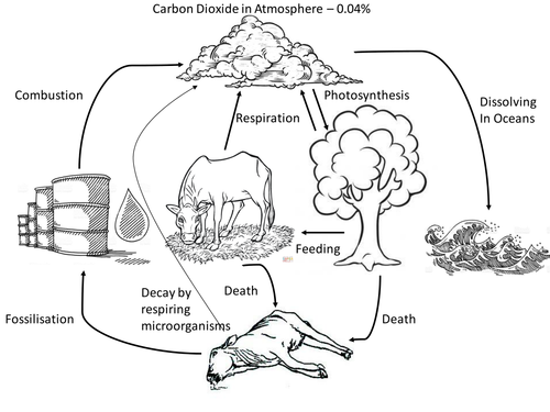 Kim's Game - Carbon Cycle Plenary   Teaching Resources