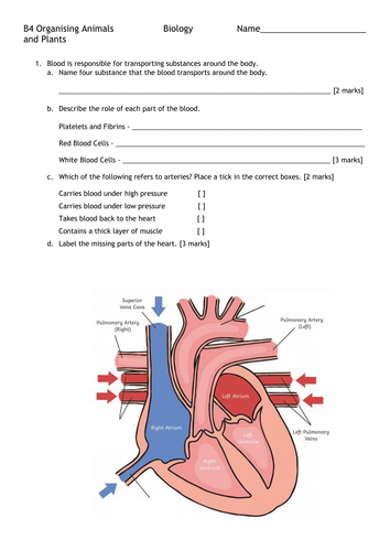 B4 Organisation and the Digestive System FORMATIVE ASSESSMENT and MARK SCHEME *NEW SPEC*
