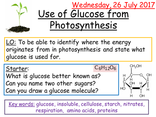 AQA 9-1 Use of Glucose from Photosynthesis