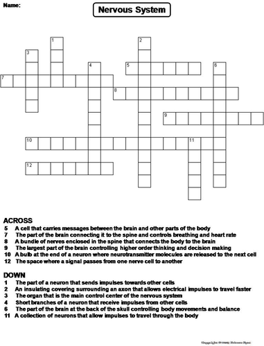Nervous system crossword puzzle by sciencespot teaching nervous system crossword puzzle by sciencespot teaching resources tes ccuart Image collections