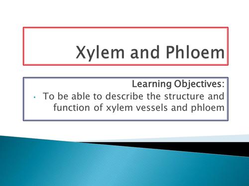 NEW SPEC - A level biology - OCR - Module 3 - Chapter 9 - Transport in plants- xylem & phloem