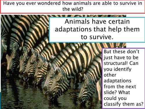 New Spec - A level biology - OCR - Module 4 - Biodiversity - Chapter 12 - Adaptation