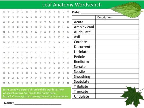 Leaf Anatomy Wordsearch Starter Activity Leaves Biology Homework