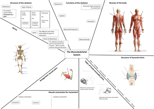 Musculoskeletal System Revision Map