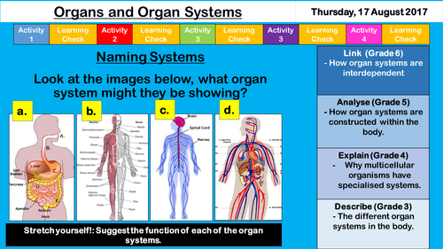 organs and systems new ks3 aqa cells by sr276 teaching resources