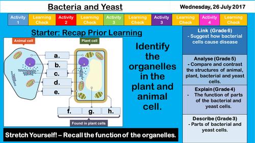 Bacteria and Yeast - NEW AQA KS3