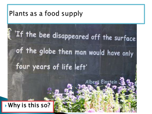 bees disappear with food supply