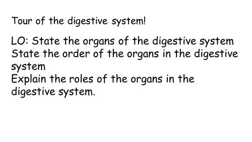 Digestive system practical lesson KS3 digestive organ system