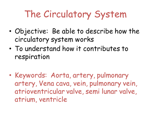 Heart theory and dissection basics KS3 circulatory system