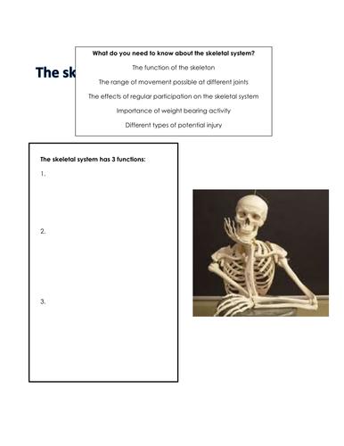 Skeletal System Workbook