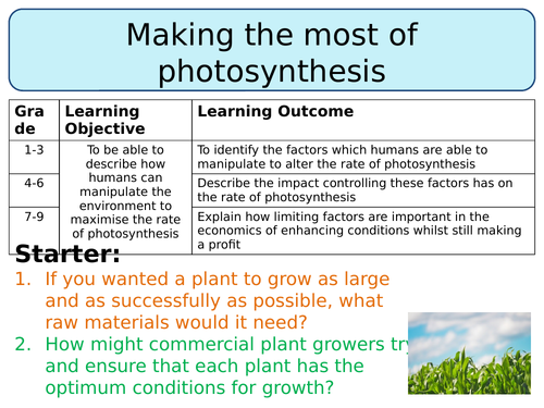 NEW AQA Trilogy GCSE (2016) Biology - Making the most of photosynthesis