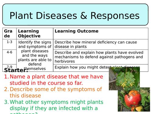NEW AQA Trilogy GCSE (2016) Biology - Plant diseases & responses HT
