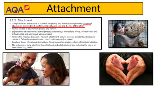 AQA Psychology - Attachment: Stages of Attachment
