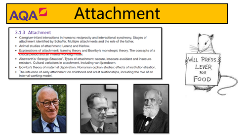 AQA Psychology - Attachment: Learning Theory