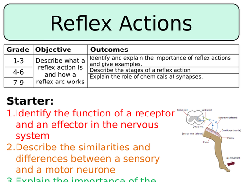 NEW AQA GCSE Trilogy (2016) Biology - Reflex Actions