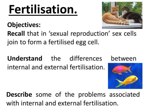 Reproduction - lesson 1 fertilisation. Sexual reproduction, Internal and external fertilisation etc