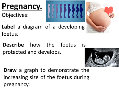 Pregnancy, development of the foetus, how it is supported and protected, graphing skills.