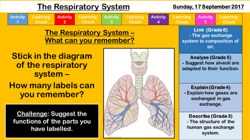 New aqa gcse the respiratory system by sr276 teaching resources new aqa gcse the respiratory system by sr276 teaching resources tes ccuart Image collections