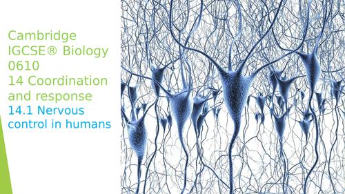 Cambridge IGCSE® Biology 0610 14.1 Nervous control in humans