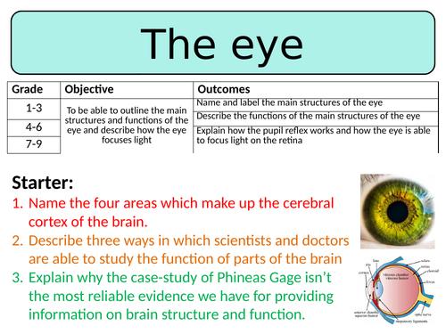 NEW AQA GCSE Biology (2016) - The eye HT