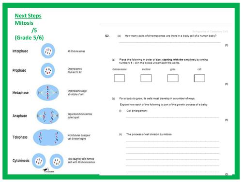 New AQA biology lesson diffusion