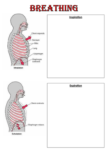 Aqa gcse pe 2016 onwards cardio respiratory system by rnewstead89 aqa gcse pe 2016 onwards cardio respiratory system by rnewstead89 teaching resources tes ccuart Gallery