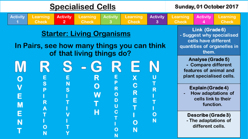 Specialised Cells - NEW AQA GCSE