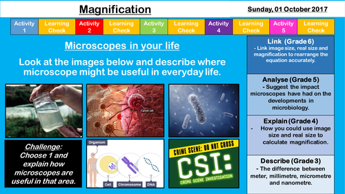 Magnification - NEW AQA GCSE