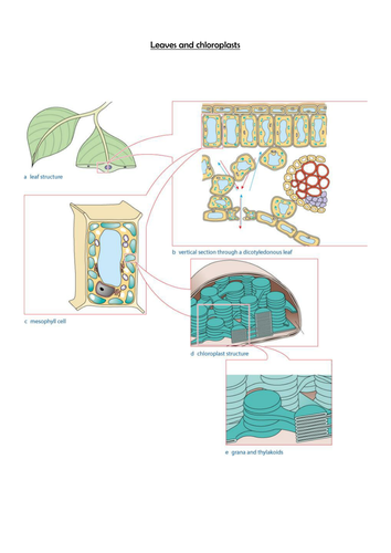 AQA A Level 2015 - Photosynthesis