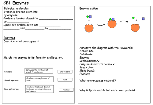 CB1 Enzyme revision sheet