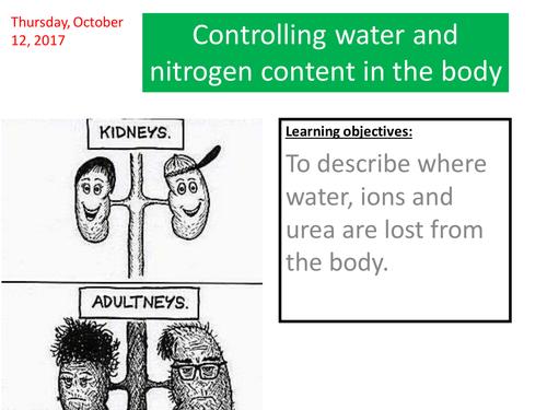 homeostasis water control