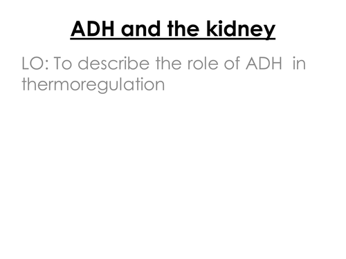 ADH and the Kidney