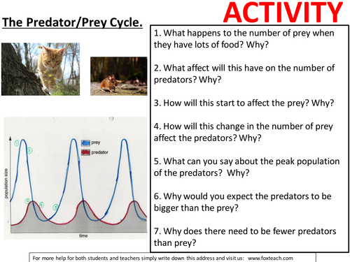 Worksheet / activity - Predator prey cycles (effects on the environment). KS3 Biology.