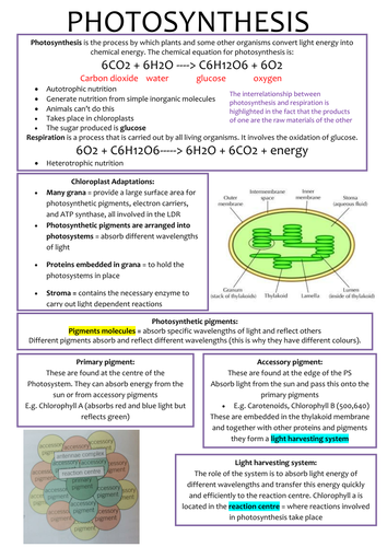 A-Level OCR Biology Photosynthesis
