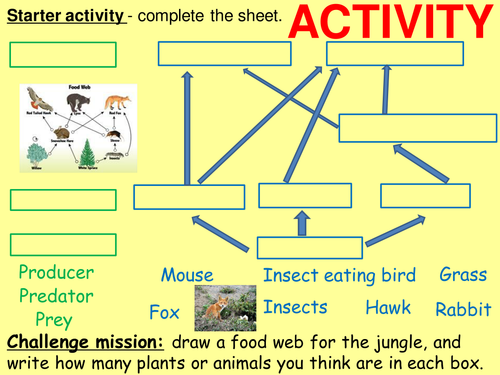 Transfers in food chains, energy loss, pyramids of numbers and biomass, bioaccumulation, pesticides.